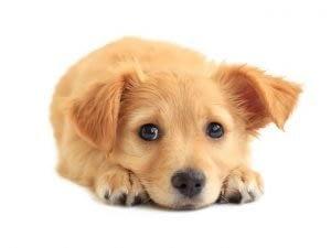 puppy e1505840745686